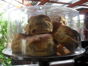 Home made scones